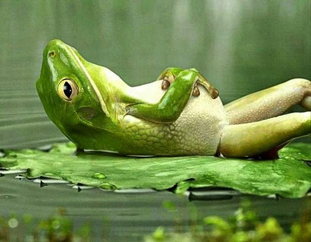 frog-avatar